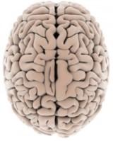 Cerebro(2)