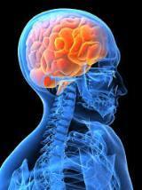 Grandes descobertas da neurociência