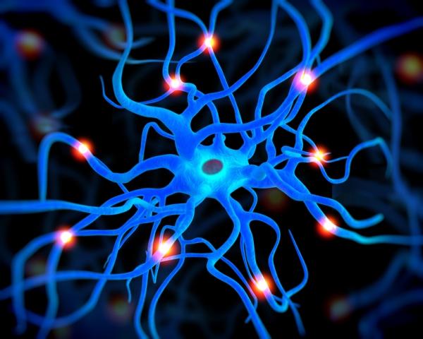 Cientistas dos EUA criam 'minicérebro' em laboratório
