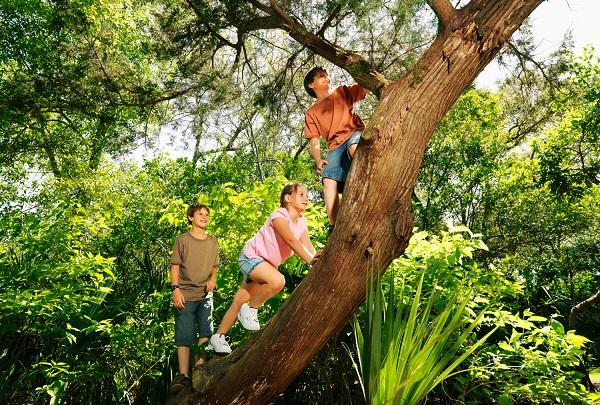 Subir em árvores melhora as funções cognitivas